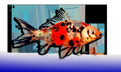 Peces agua fria dnat ecosistemas for Peces de acuario agua dulce fria