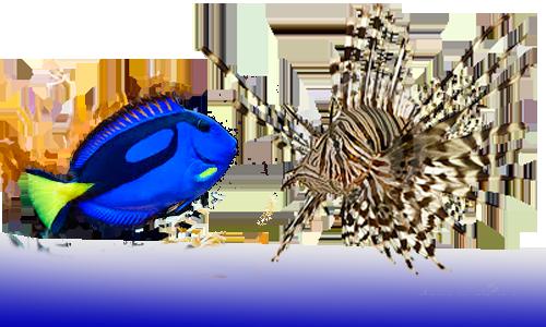 Tienda peces agua dulce y marino dnat ecosistemas for Tipos de peces de agua fria