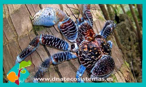 Cangrejos y caracoles dnat ecosistemas for Comida viva para peces