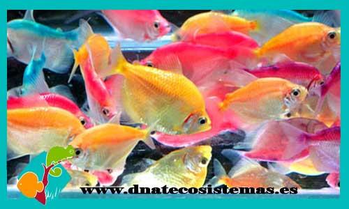 Resultado de imagen de monjita color dnatecosistemas