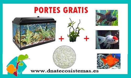 OFERTA PACK GOLDFISH