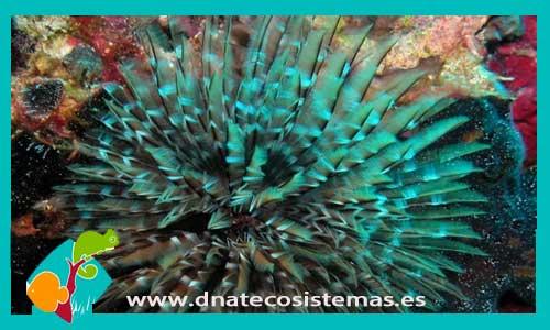 Pintura de fondo marino en agua dulce