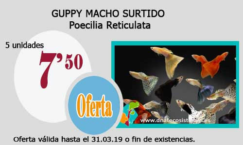 GUPPY MACHO SURTIDO