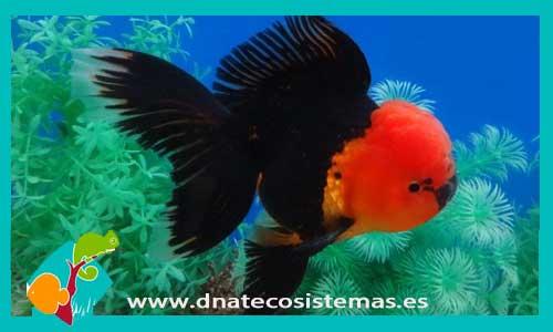 Orandas y boinas rojas dnat ecosistemas Peces de agua dulce fria