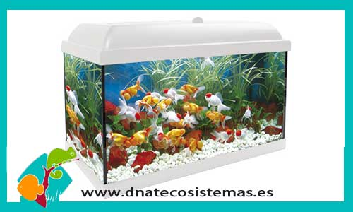 Acuarios de 51 100 litros dnat ecosistemas for Comida viva para peces