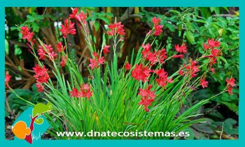 Plantas de estanque dnat ecosistemas for Plantas para estanques
