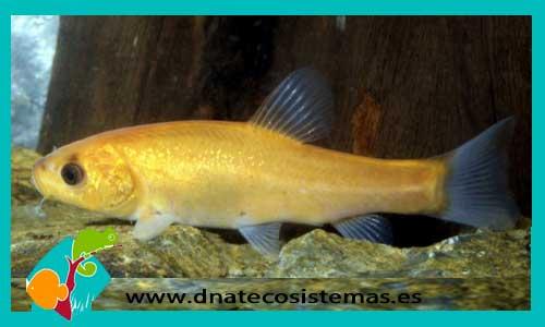 Otros peces dnat ecosistemas for Comida viva para peces