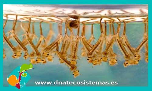 Acuatico dnat ecosistemas for Comida viva para peces