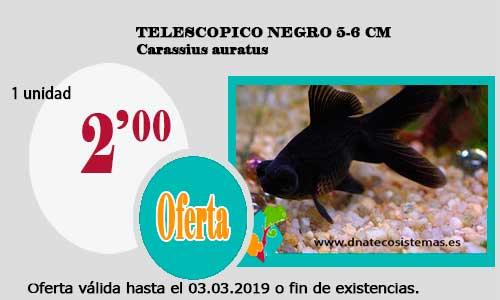1 Unid Carassius auratus. 03-03-2019-telescopico-negro-5-6-cm- b68be16a901