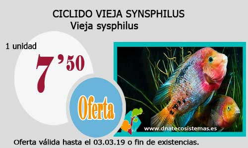 CICLIDO VIEJA SYNSPHILUS