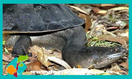 Tortugas acu ticas dnat ecosistemas for Comida viva para peces