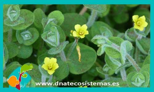 Plantas de estanque dnat ecosistemas for Plantas de estanque