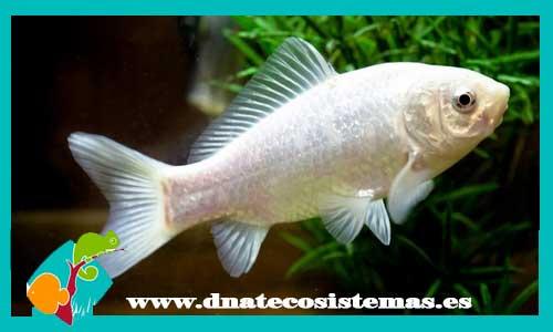 Cometas dnat ecosistemas for Comida viva para peces