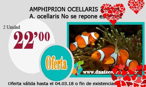 AMPHIPRION OCELLARIS 3-4cms