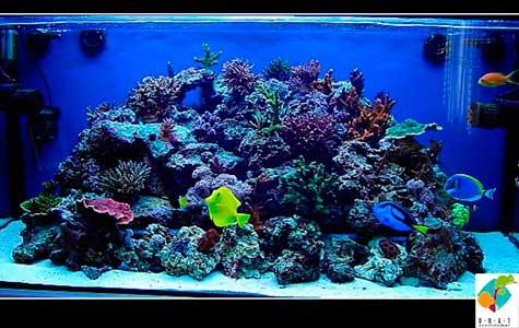 Acuarios marino y arrefice alimento acuario marino for Filtro acuario marino