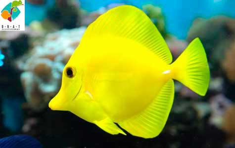 Acuarios marino y arrefice alimento acuario marino for Peces de acuario marino