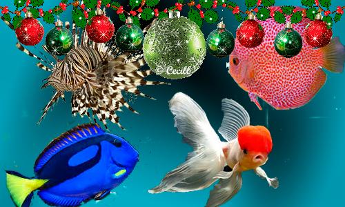 Tienda dnat ecosistemas dnat ecosistemas dnat for Acuariofilia peces ornamentales
